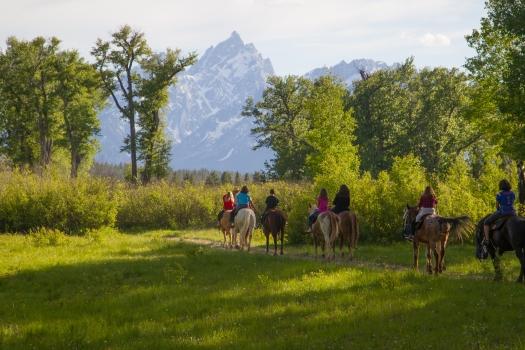 horse blog photo